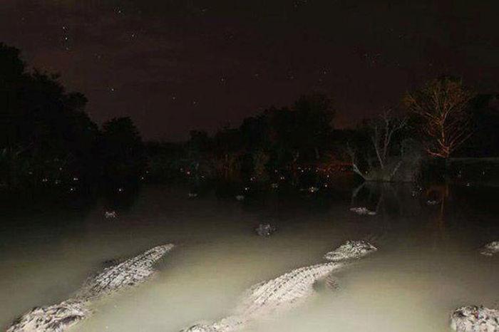 timsah gölü