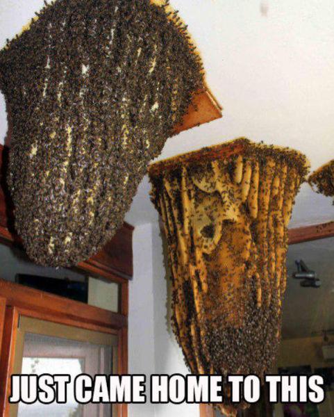 Evin tavanından bal kovanı çıkması