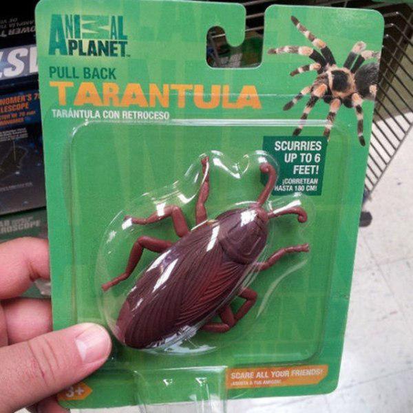 Hamamböceği görünümlü tarantula
