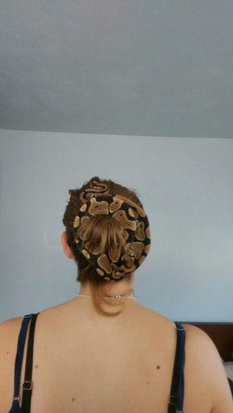 Yılan şeklinde saç tokası