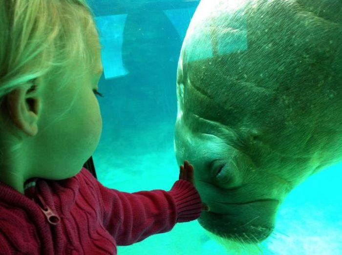 deniz aslanı ve çocuk