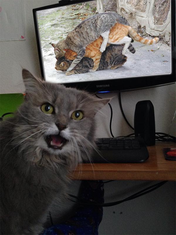 Porno izlemeye çalışırken yakalanan kedi :)