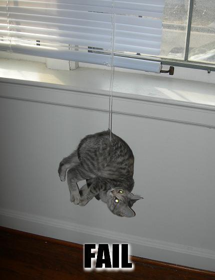 İnanılmaz Kedi Hataları