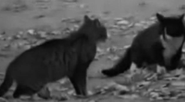 Kedi Köpek Kavgasi