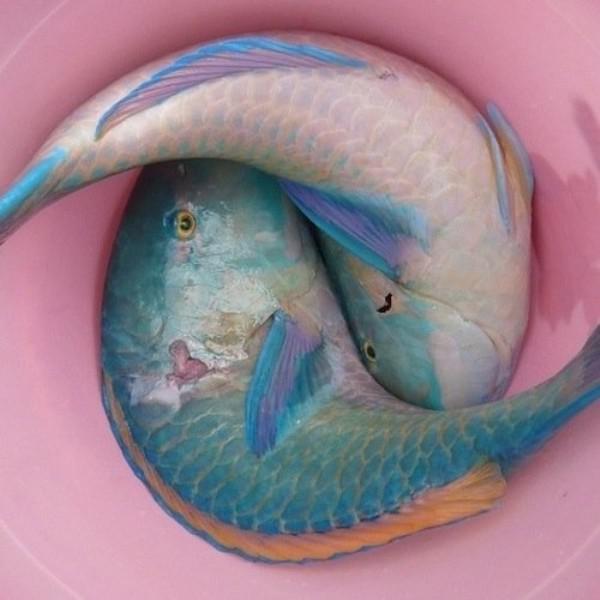 Mavi Balık