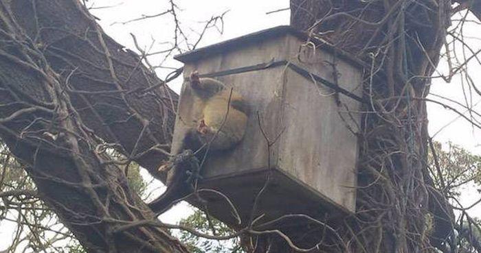Kuş Yuvasına Sıkışmış Maymun