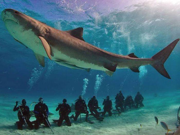 Köpekbalığı izleyen dalgıçlar