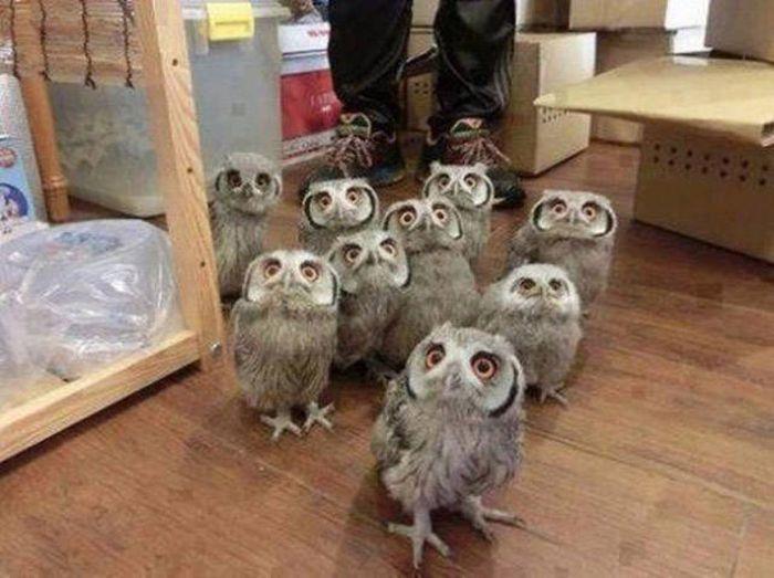 Baykuşların Garip Bakışları