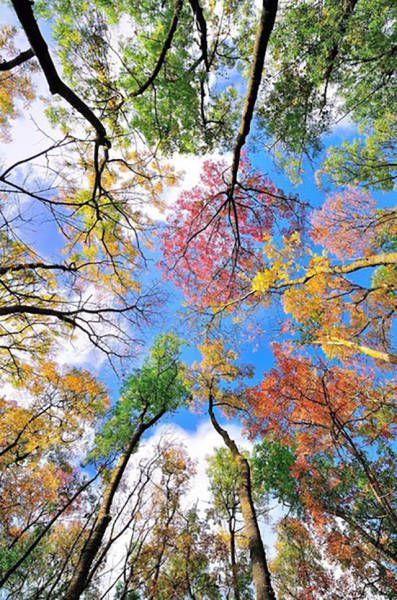 İnanılmaz Ağaç Yaprakları Fotoğrafları