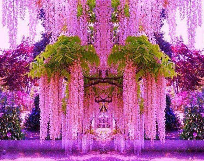 Dünyanın En Güzel Çiçekleri