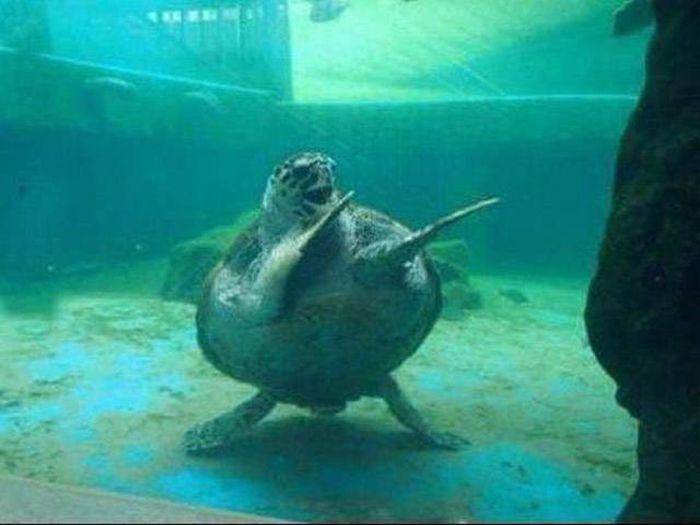 Kung-fu yapan kaplumbağa