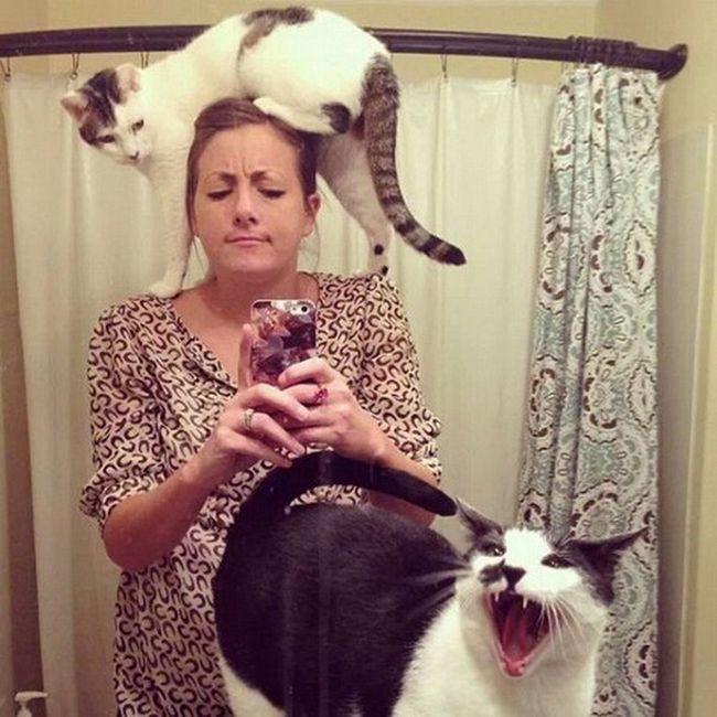 Kedilerin Umursamaz Halleri