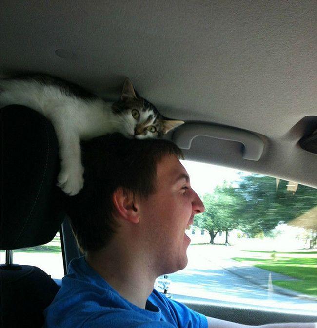 İnsanın Tepesinden İnmez Bu Kedilerİnsanın Tepesinden İnmez Bu Kediler