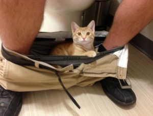 Tuvalette Bile Huzur Vermeyen Kedi