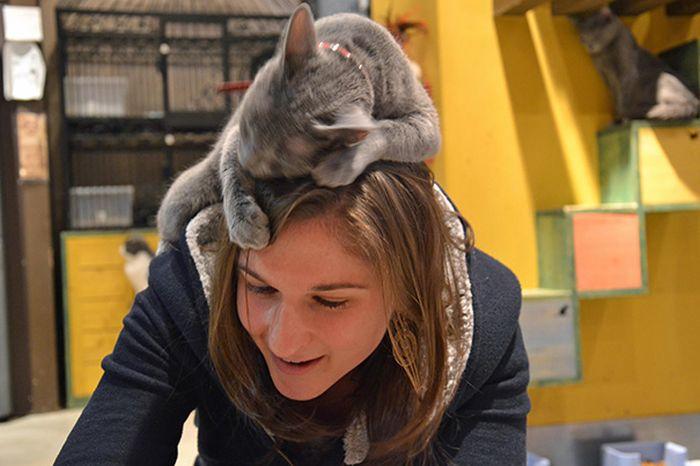 İnsanın Tepesinden İnmez Bu Kediler