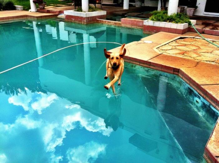 Havuzun Üzerinde Koşmaya Çalışan Köpek
