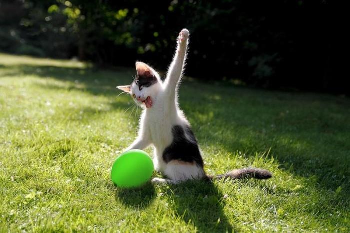 Egzersiz Yapan Kedi
