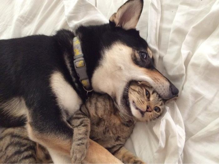 Kedinin Kafasını Yakalayan Köpek